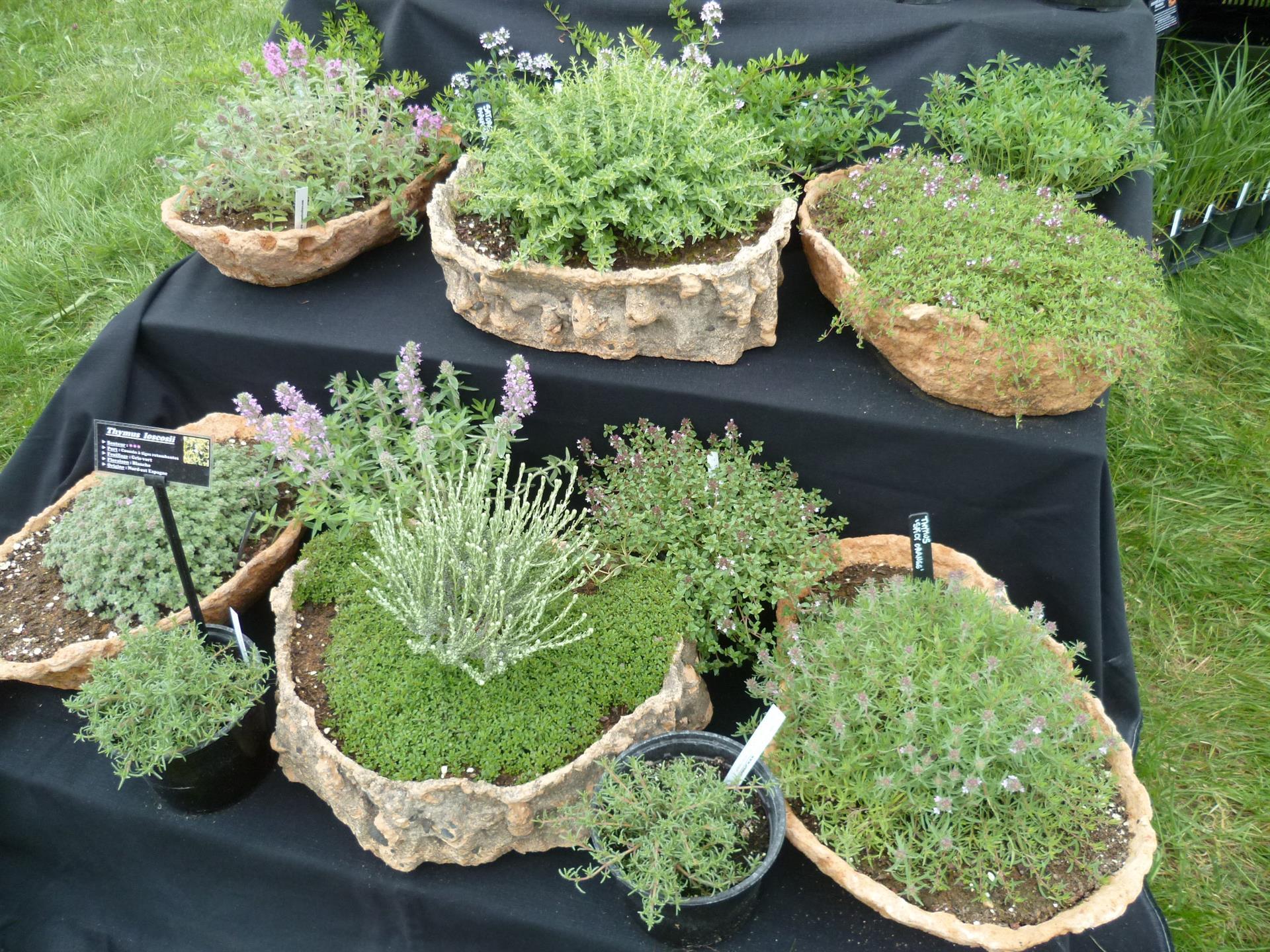 Planter Menthe En Pot comment et quand planter du thym, persil, basilic, menthe